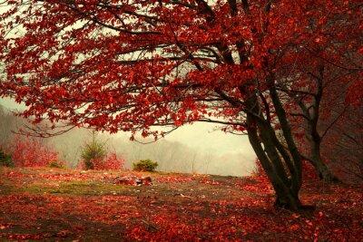 Obraz Piękny las w mglisty dzień jesieni