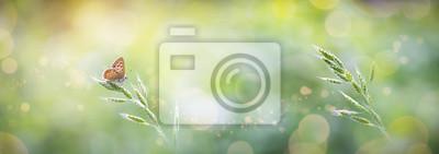Obraz Piękny motyl transparent ze światłami i Bokeh