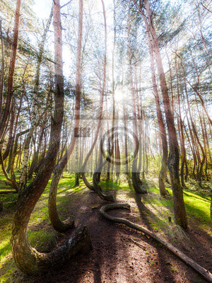 Piękny poranek w Krzywy Las z promieni słonecznych i długich s