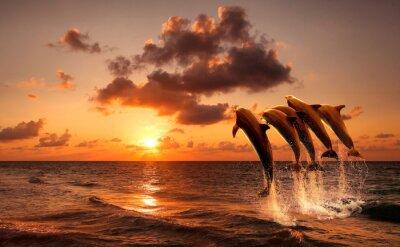 Obraz piękny zachód słońca z delfinami skoki