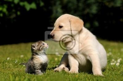 Obraz Pies i kot
