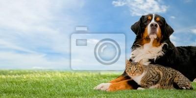 Pies i przyjaciele razem na trawie kot