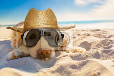 Obraz Pies na emeryturze na plaży