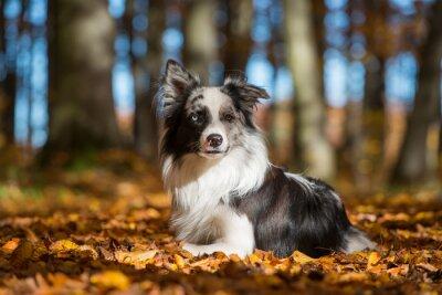 Obraz Pies w jesiennych liści