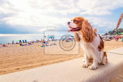 Pies wakacje, pies na plaży,