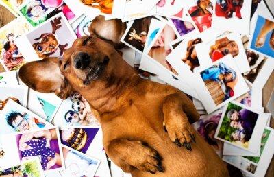 Obraz Pies wśród zdjęć