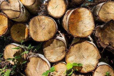 Obraz Pile of cut tree trunks