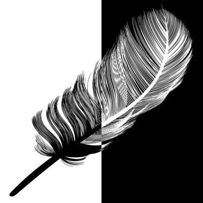 Obraz Pióropusz en noir et blanc pl