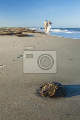 plaża ślub, panna młoda i pan młody w tle z naciskiem na pierwszym planie podkowy kraba
