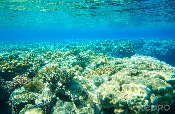 Obraz Podwodny