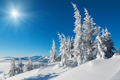 Obraz pokryte śniegiem jodły