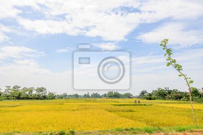 Pola ryżowe w Wietnamie