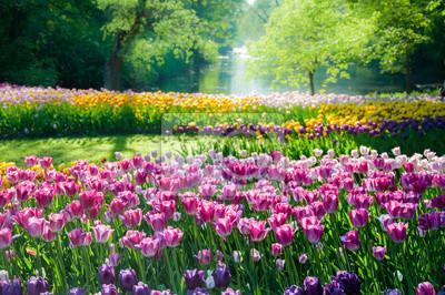 Obraz Pola tulipanów kwiaty