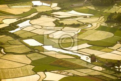 Pole ryżu w Wietnamie