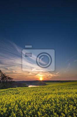 Pole rzepaku na zachodzie słońca