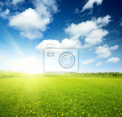 Pole wiosennych kwiatów i niebo idealny