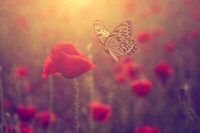 Obraz Poppy i motyl