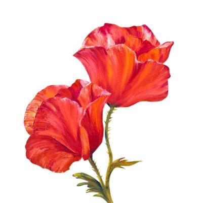 Obraz Poppy isolated on white, oil painting