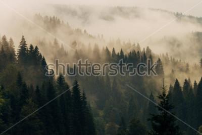 Obraz Poranna mgła na zboczach górskich. Góry Karpaty. Ukraina, Europa.