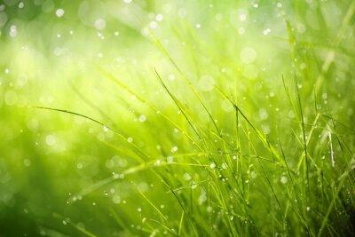 Obraz Poranna rosa na wiosennej trawie
