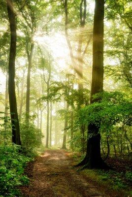 Obraz Poranne słońce świeci, w mglisty las