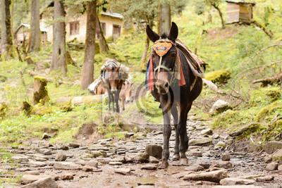 Porter osioł. Trekking w górach w Nepalu. Zima z plecakiem w Himalajach. Nepal Trekking i podróże zapewnić odpowiednie miejsce dla nie zapominając trekkingowe wyprawy w Himalaje.