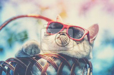 Obraz Portrait of a funny cat wearing sunglasses lying in a basket outdoors in summer. Cat enjoying summer and looking at the sun