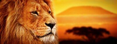 Obraz Portret lew na sawannie. Kilimandżaro na zachodzie słońca. Safari