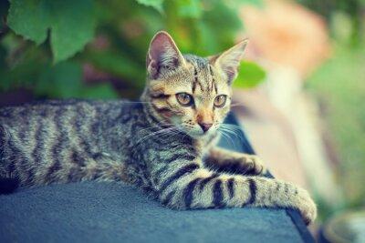 Obraz Portret na zewnątrz kociak w ogrodzie