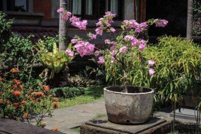 Obraz Pot With Flowers for garden decoration on Bali island