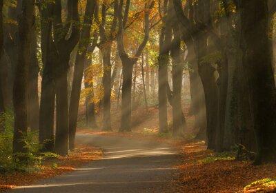 Obraz Promienie słoneczne i piękne kolory autum w lesie.