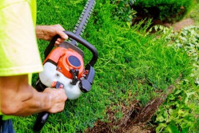 Obraz Pruning trees with gardener in pruning trees with trimmer