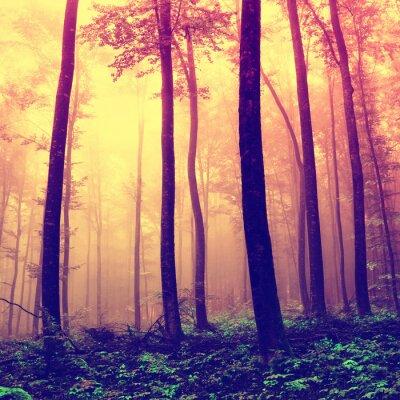 Obraz Przerażające tle drzew leśnych