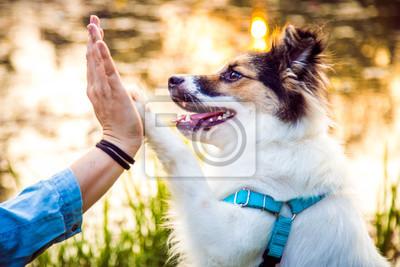 Obraz Przybij piątkę - pies podaje łapę opiekunowi