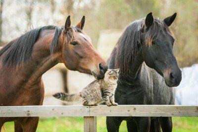 Obraz Przyjaźń z kotów i koni