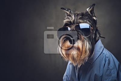 Obraz Psy ubrani w niebieską koszulę i okulary słoneczne.