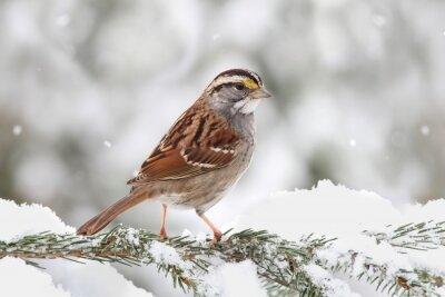 Obraz Ptak w śniegu