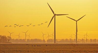 Obraz Ptaki latające nad polem o świcie w zimie