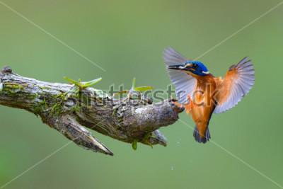 Obraz Ptasia fotografia i przyroda