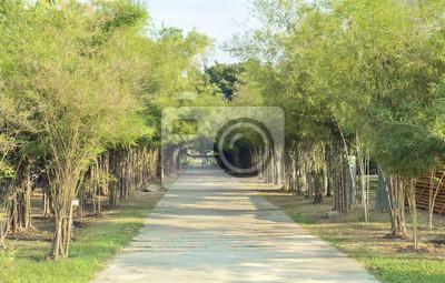 Publiczny / Widok ścieżki w parku publicznym.