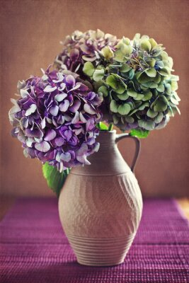 Obraz purpurowe kwiaty hortensja w starym glinianym słoju.