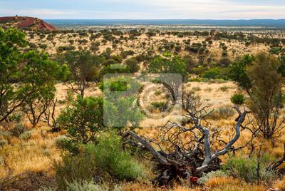 Pustynia australijski (chory) w Terytorium Północnym