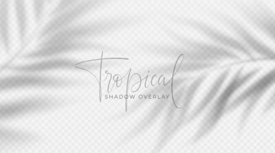 Obraz Realistic transparent shadow from a leaf of a palm tree on the white background. Tropical leaves shadow. Mockup with palm leaves shadow. Vector illustration