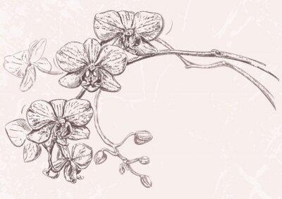 Obraz Ręcznie rysowane ilustracji z kwiatów orchidei z pączkami samodzielnie na tle teksturowanej