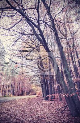 Retro filtrowany obraz jesiennych lasów.