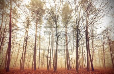 Retro filtrowany obraz mglisty las.