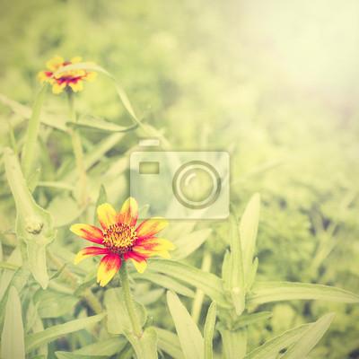 Retro kwiat tle przyrody.