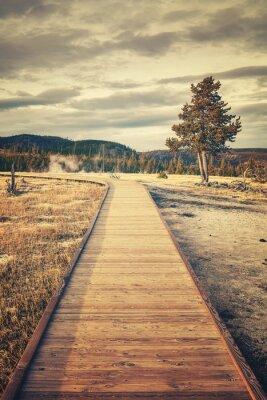 Retro stonowanych obraz drewnianej? Cie? Ki w parku narodowym Yellowstone, Wyoming, USA.