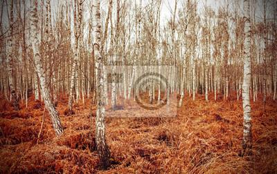 Retro styl obraz jesiennej Brzozowy gaj z czerwonym paproci.