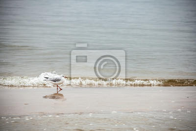Retro style nature background. Bird on the beach.